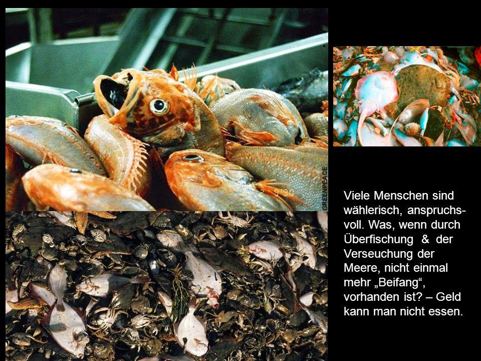 In Schleppnetzen gefangen, in der Nahrungskette anderer Meerestiere fehlen sie & wir wundern uns, dass immer mehr Arten aussterben! -