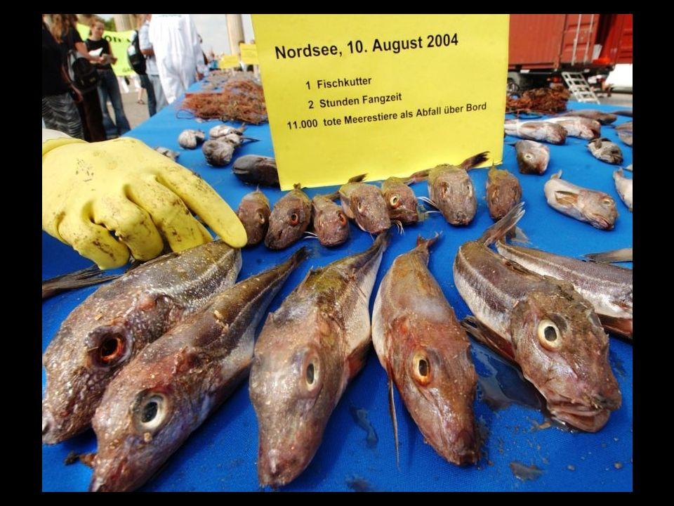 Viele Menschen sind wählerisch, anspruchs- voll. Was, wenn durch Überfischung & der Verseuchung der Meere, nicht einmal mehr Beifang, vorhanden ist? –