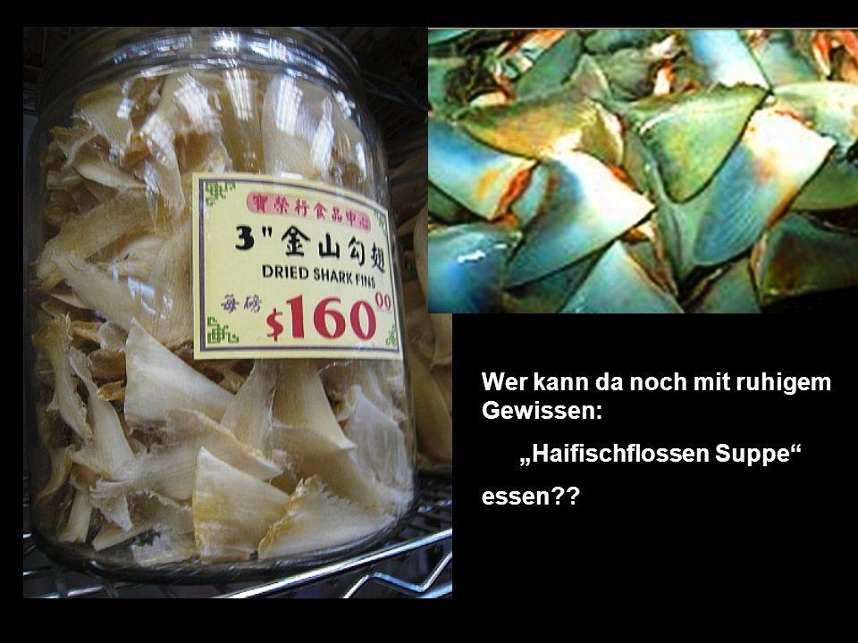 Wer kann da noch mit ruhigem Gewissen: Haifischflossen Suppe essen??