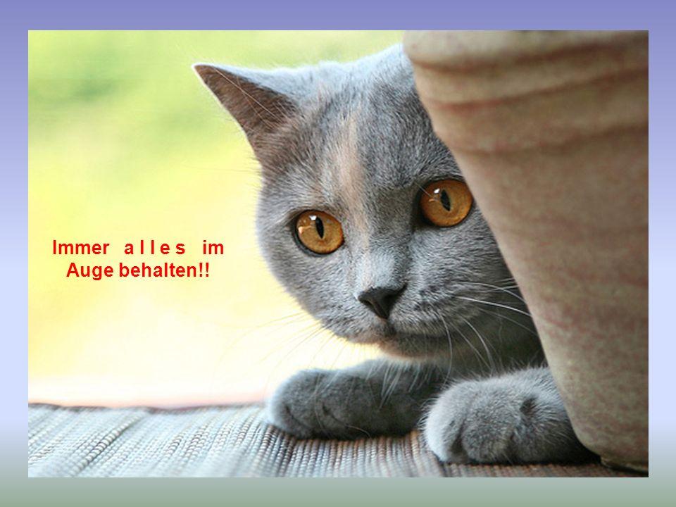 Schweinegrippe – sicherheitshalber immer die Pfoten lecken, wenn man etwas Fremdes anfasst!!! hme12@t-online.de