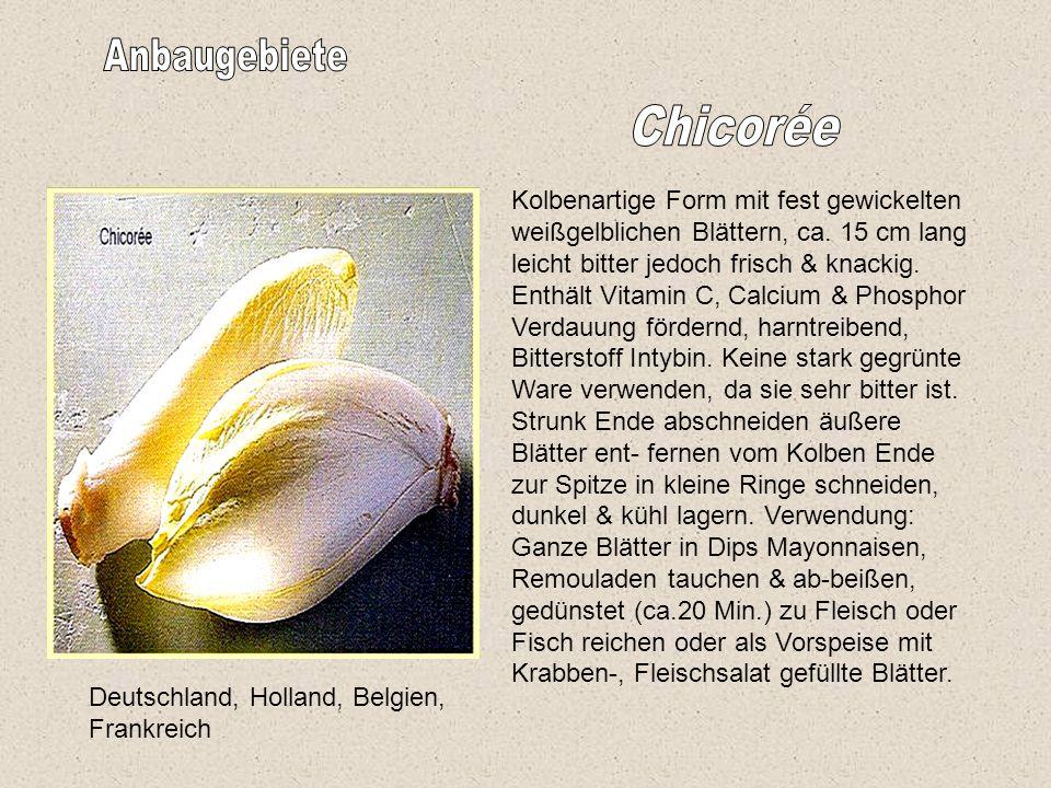 Deutschland, Holland, Belgien, Frankreich Kolbenartige Form mit fest gewickelten weißgelblichen Blättern, ca.