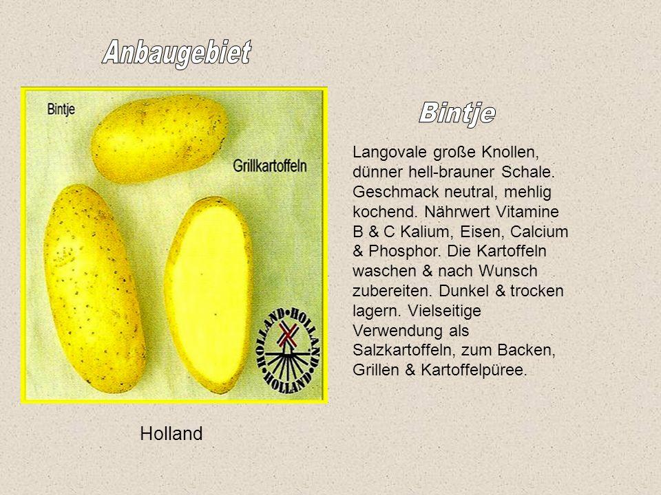 Holland Langovale große Knollen, dünner hell-brauner Schale.