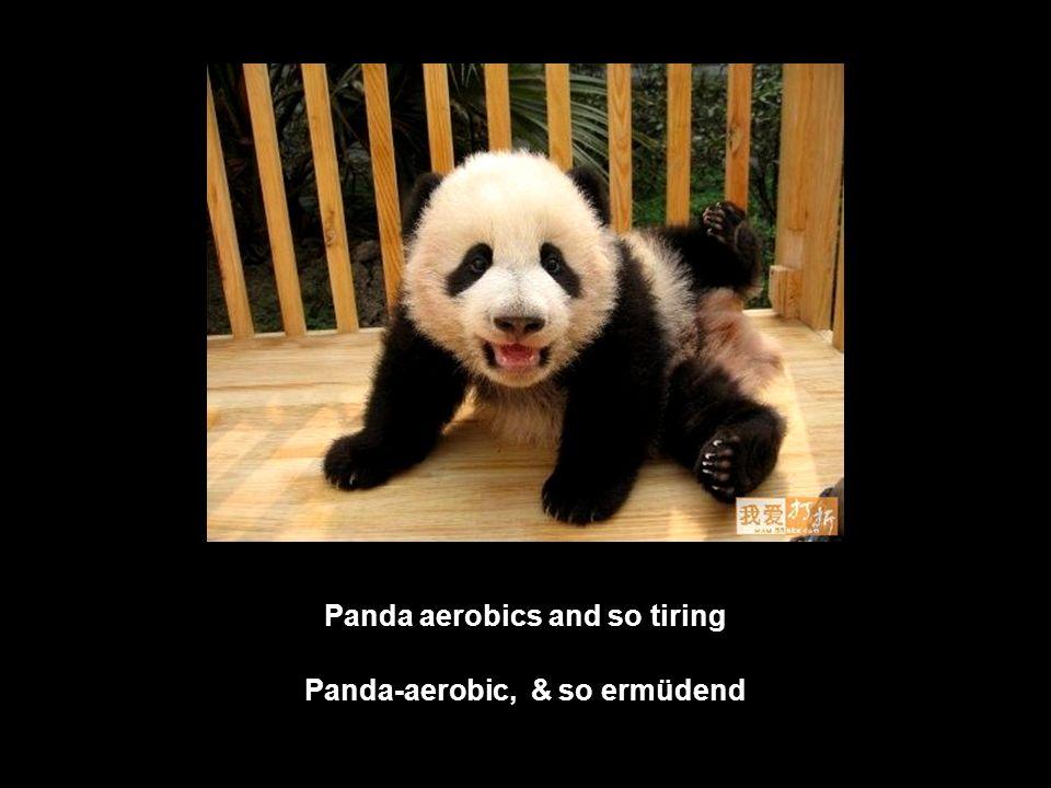 Wasn´t me, I didn´t steal this bamboo shoot, it was sitting here! Ich war es nicht, ich habe die Bambussprosse nicht gestohlen, sie lag schon da!
