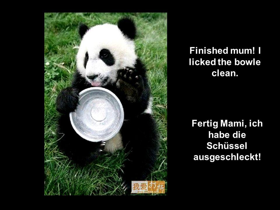 Panda aerobics and so tiring Panda-aerobic, & so ermüdend
