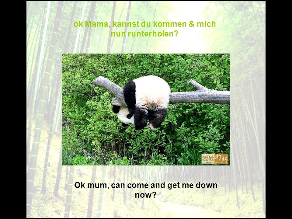 Ok mum, can come and get me down now? ok Mama, kannst du kommen & mich nun runterholen?