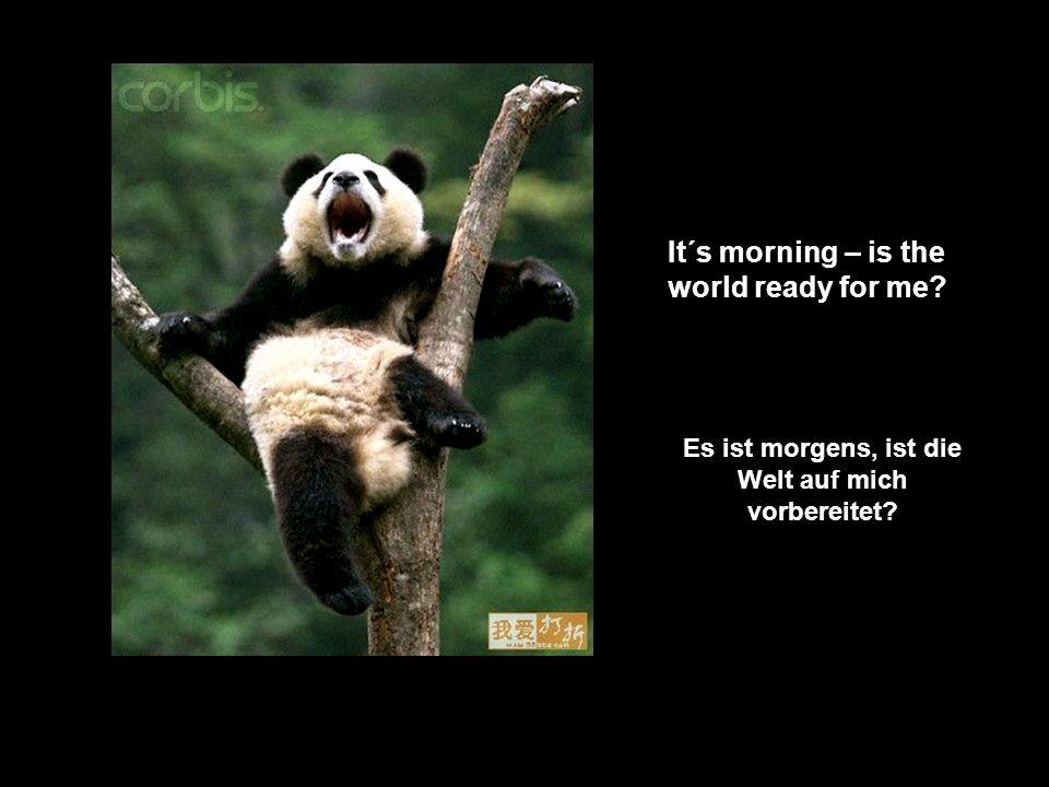It´s morning – is the world ready for me? Es ist morgens, ist die Welt auf mich vorbereitet?