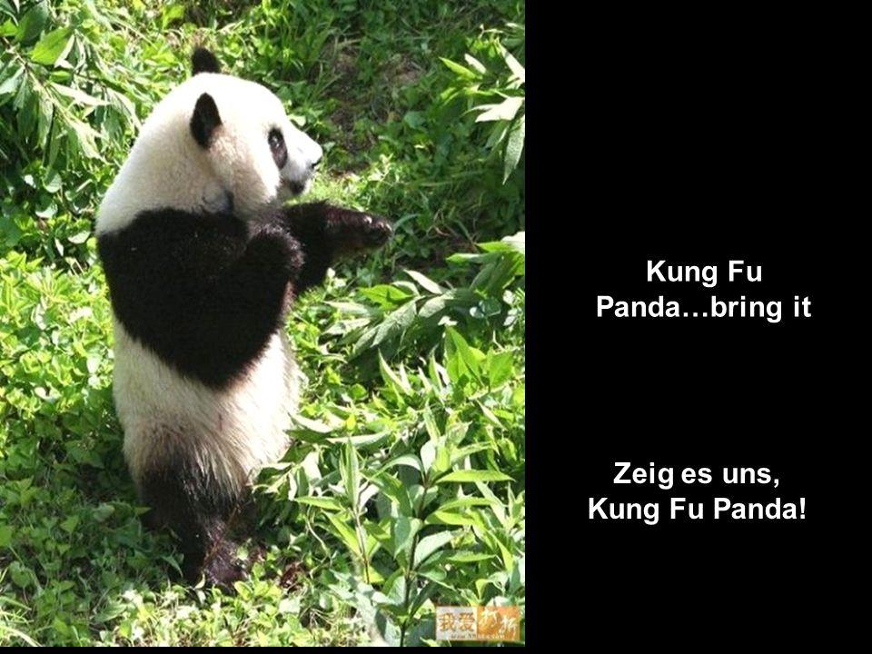 Kung Fu Panda…bring it Zeig es uns, Kung Fu Panda!