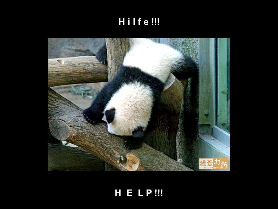 Noughty Panda, time out corner Null Bock Panda in der Auszeit Ecke