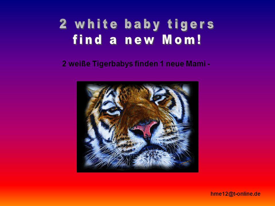 2 weiße Tigerbabys finden 1 neue Mami - hme12@t-online.de