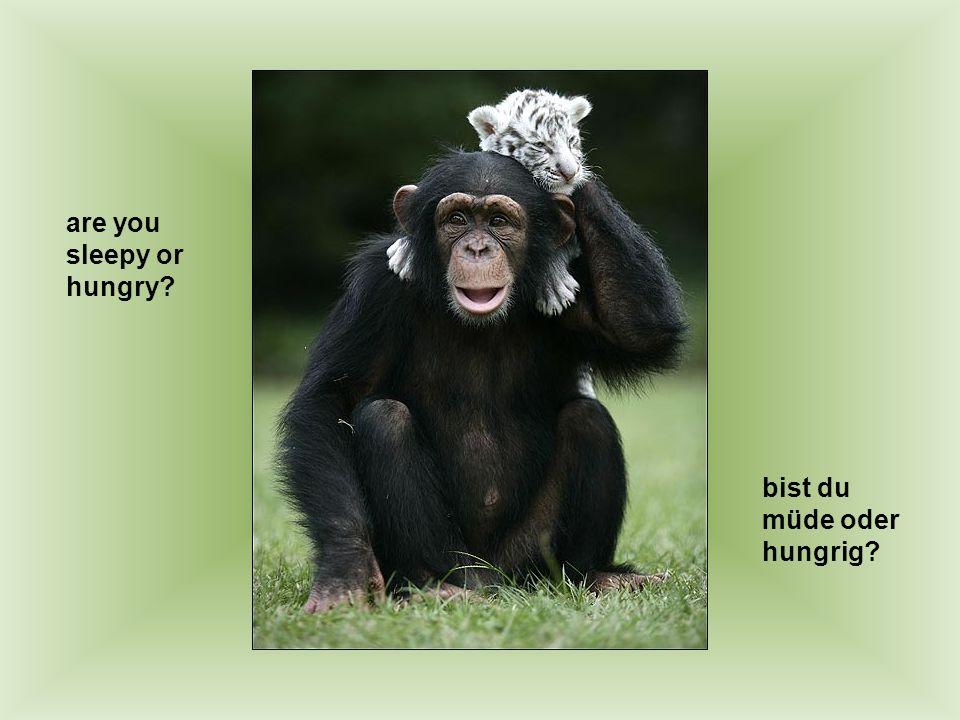 are you sleepy or hungry? bist du müde oder hungrig?