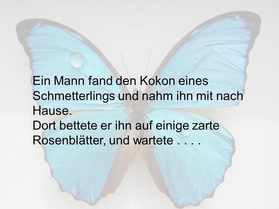 Ein Mann fand den Kokon eines Schmetterlings und nahm ihn mit nach Hause. Dort bettete er ihn auf einige zarte Rosenblätter, und wartete....