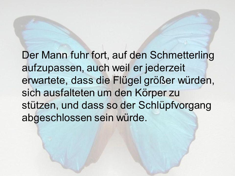Der Mann fuhr fort, auf den Schmetterling aufzupassen, auch weil er jederzeit erwartete, dass die Flügel größer würden, sich ausfalteten um den Körper