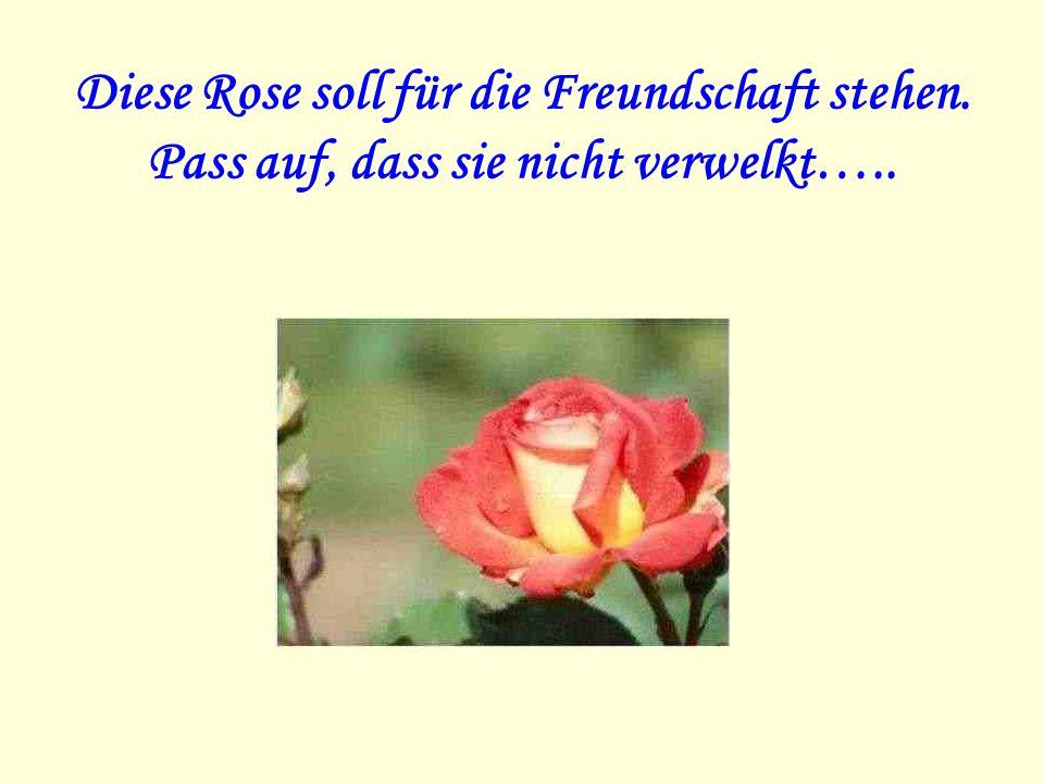 Diese Rose soll für die Freundschaft stehen. Pass auf, dass sie nicht verwelkt…..