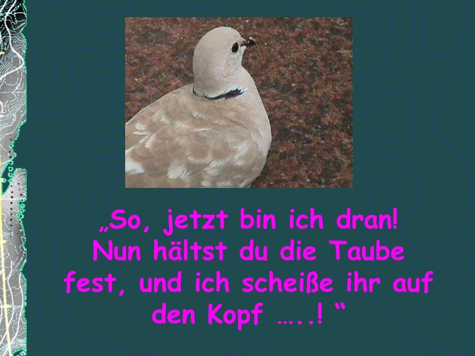 So, jetzt bin ich dran! Nun hältst du die Taube fest, und ich scheiße ihr auf den Kopf …..!
