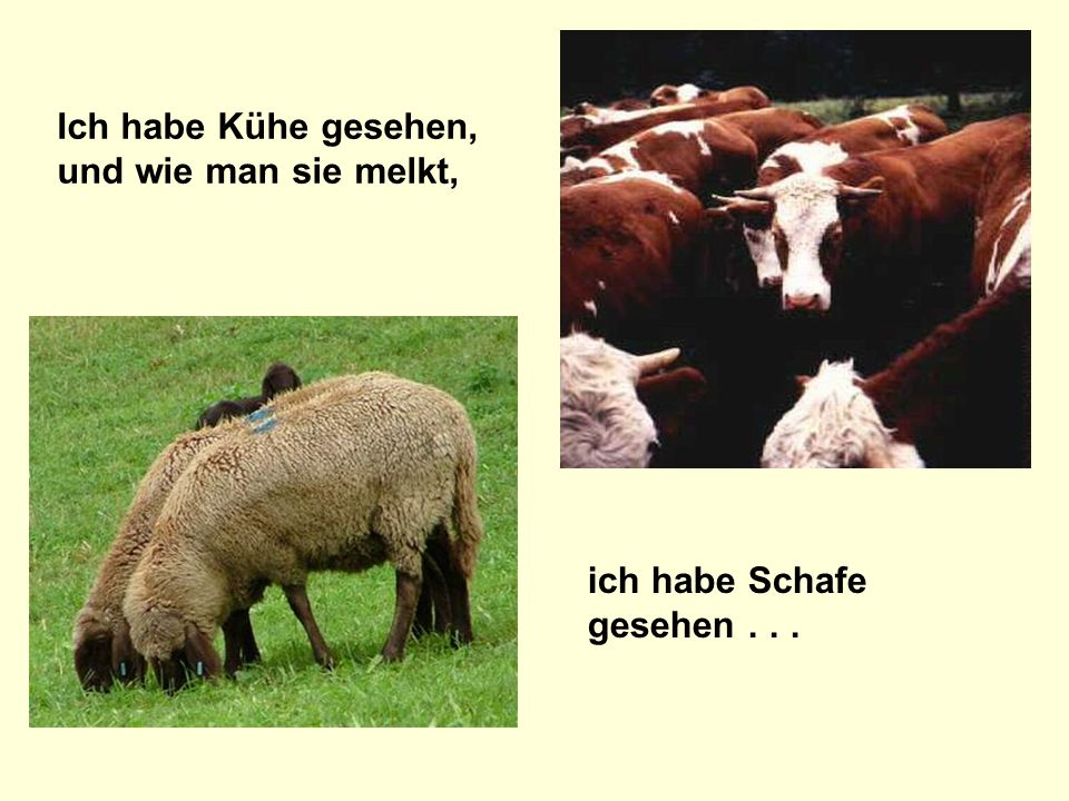 Ich habe Kühe gesehen, und wie man sie melkt, ich habe Schafe gesehen...