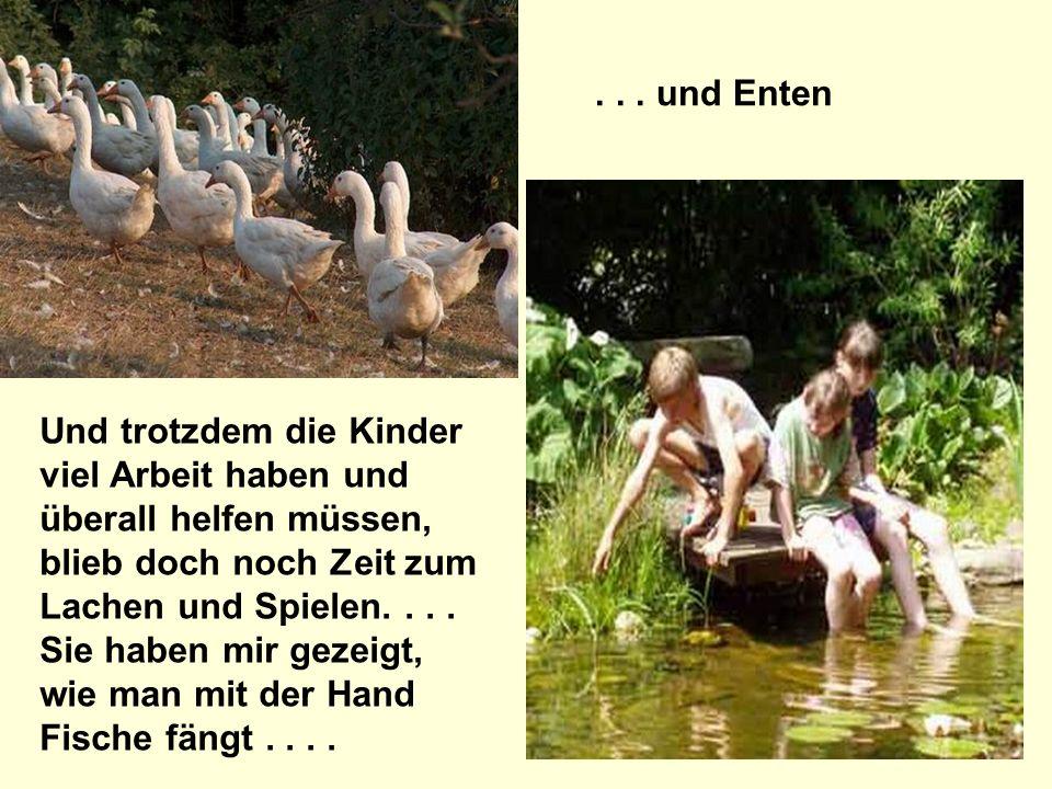 ... und Enten Und trotzdem die Kinder viel Arbeit haben und überall helfen müssen, blieb doch noch Zeit zum Lachen und Spielen.... Sie haben mir gezei