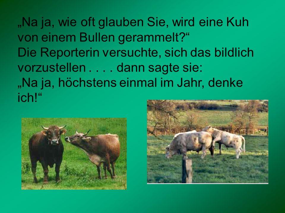 Na ja, wie oft glauben Sie, wird eine Kuh von einem Bullen gerammelt? Die Reporterin versuchte, sich das bildlich vorzustellen.... dann sagte sie: Na