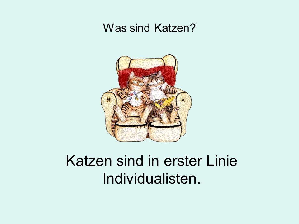 Was sind Katzen? Katzen sind in erster Linie Individualisten.