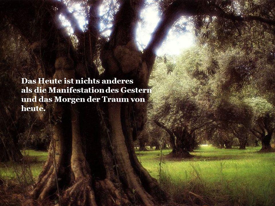 Du musst die Stadt der Bequemlichkeit verlassen und in den Urwald deiner Intuition eintauchen.