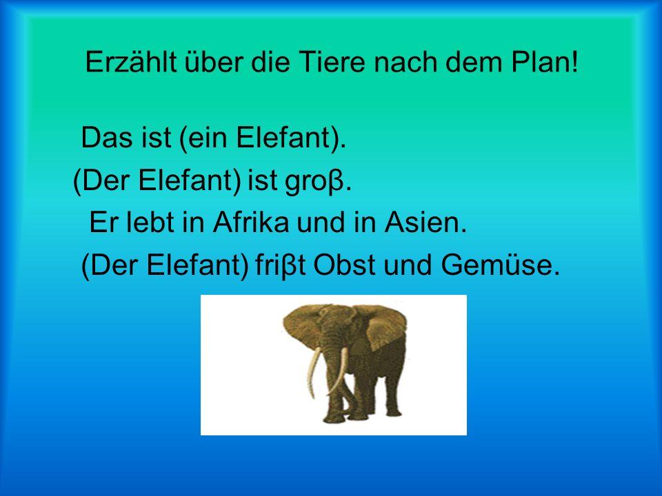 Erzählt über die Tiere nach dem Plan.Das ist (ein Elefant).