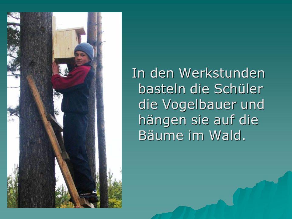 In den Werkstunden basteln die Schüler die Vogelbauer und hängen sie auf die Bäume im Wald. In den Werkstunden basteln die Schüler die Vogelbauer und