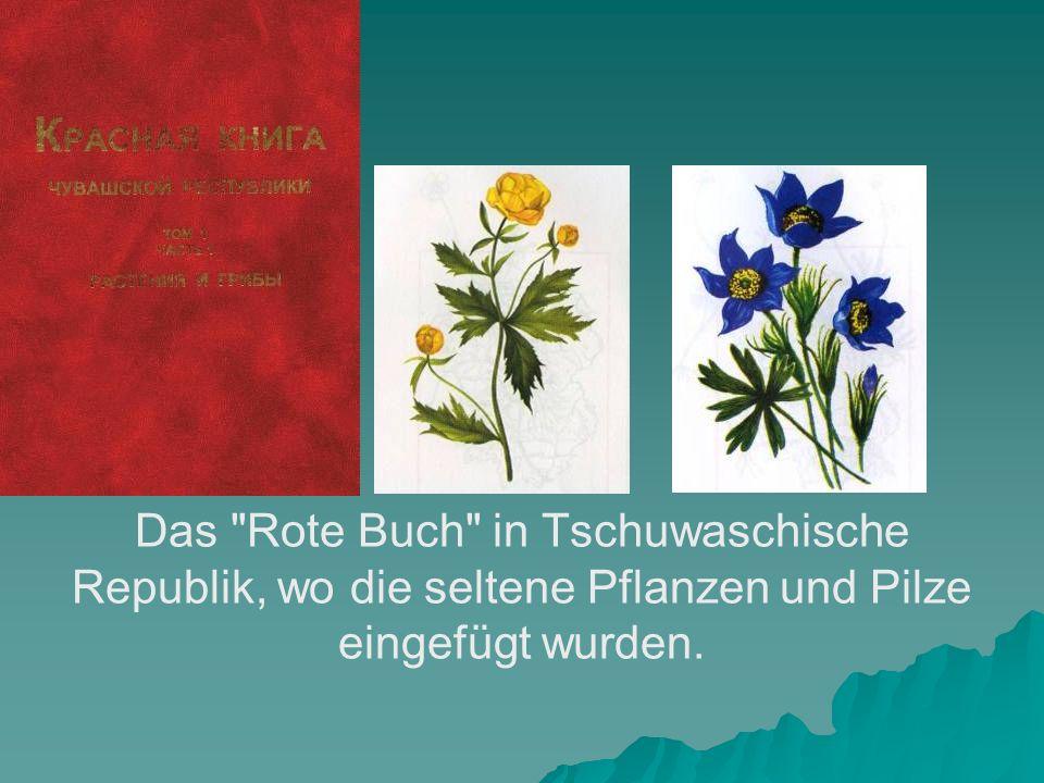Das Rote Buch in Tschuwaschische Republik, wo die seltene Pflanzen und Pilze eingefügt wurden.