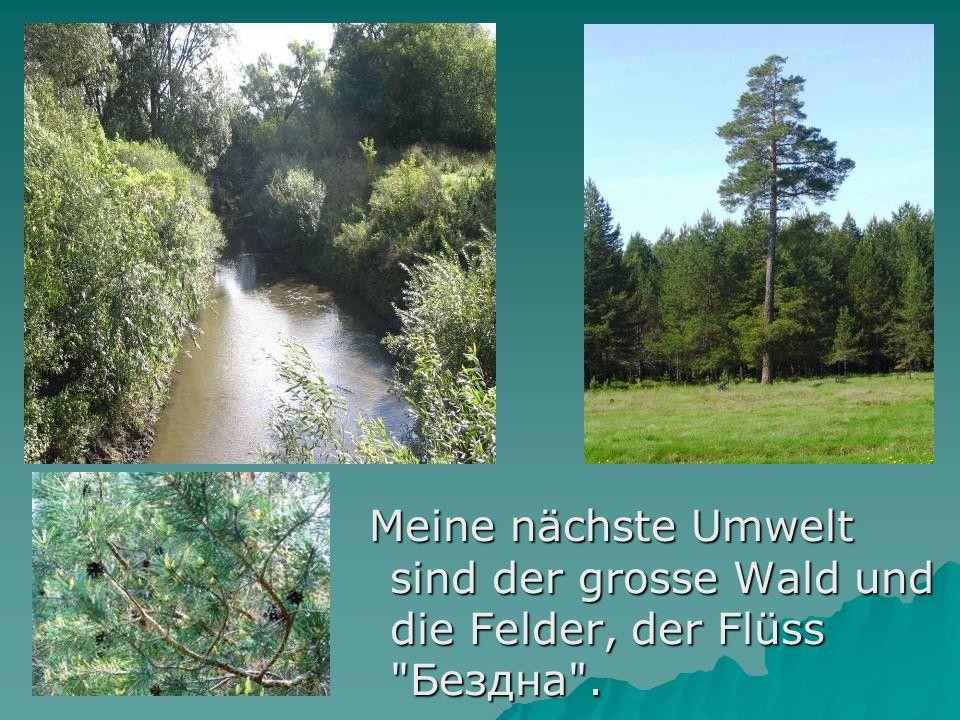 Meine nächste Umwelt sind der grosse Wald und die Felder, der Flüss