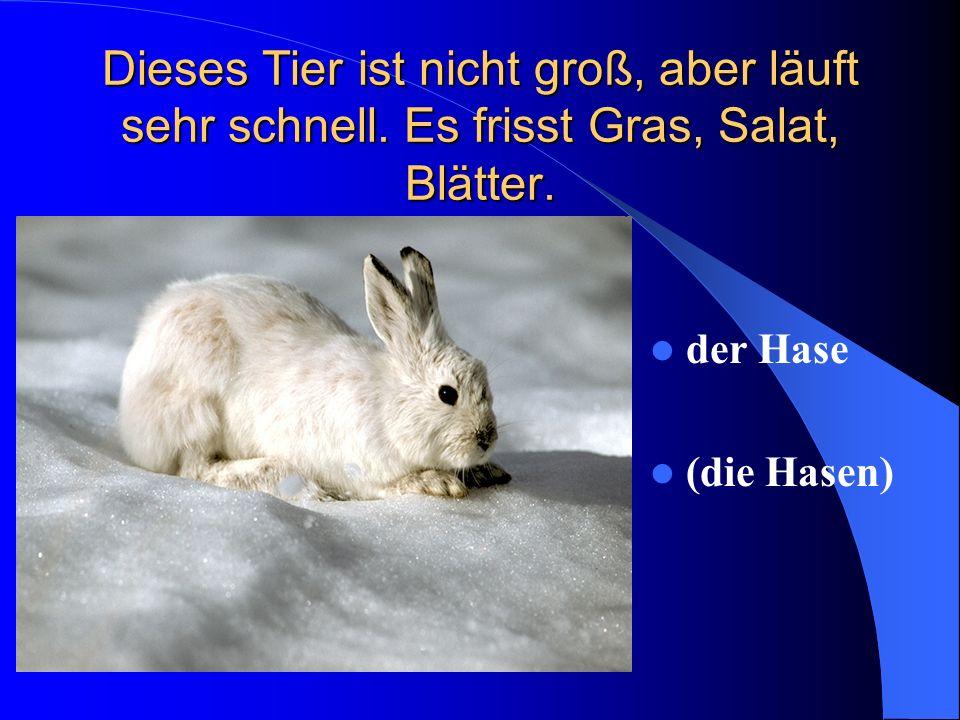 Dieses Tier ist nicht groß, aber läuft sehr schnell. Es frisst Gras, Salat, Blätter. der Hase (die Hasen)