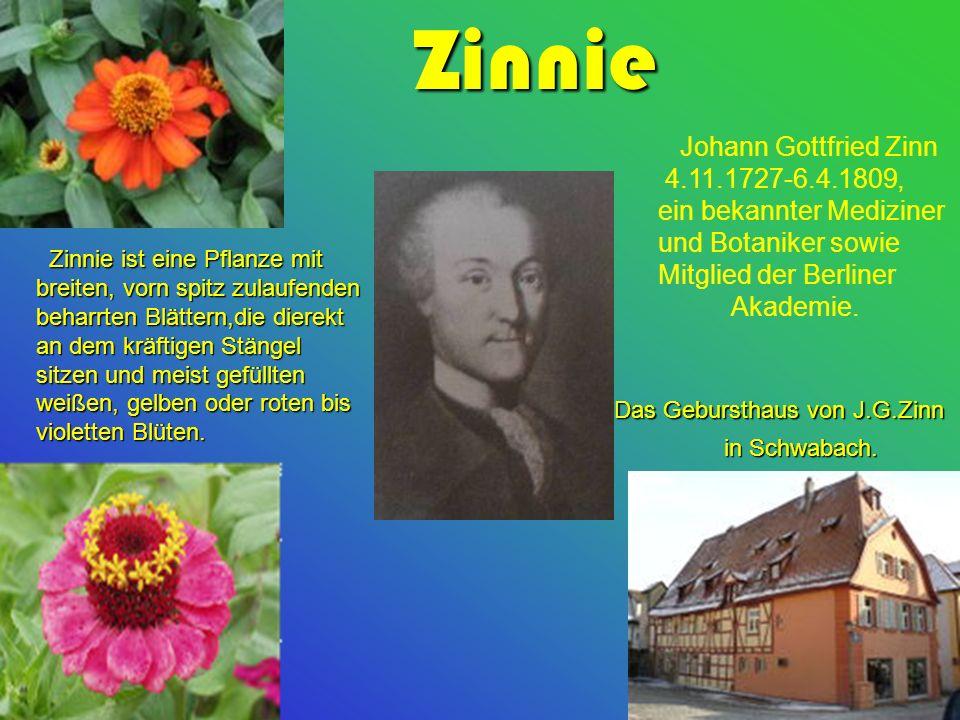 Johann Gottfried Zinn 4.11.1727-6.4.1809, ein bekannter Mediziner und Botaniker sowie Mitglied der Berliner Akademie.