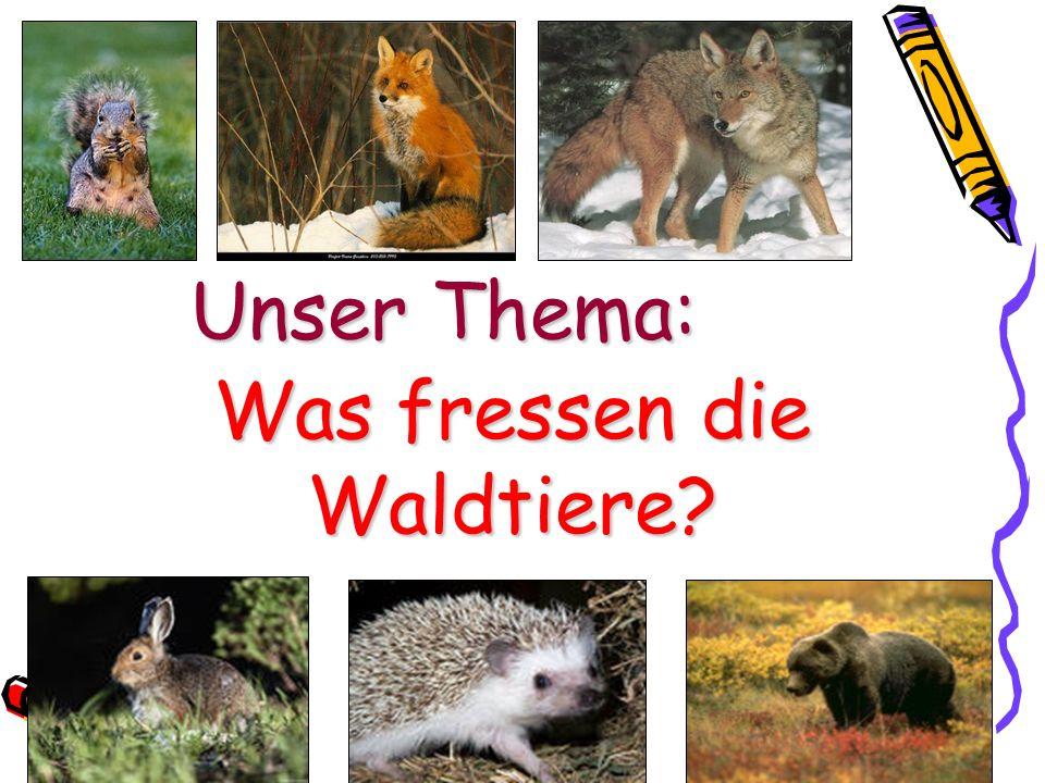 Unser Thema: Was fressen die Waldtiere?