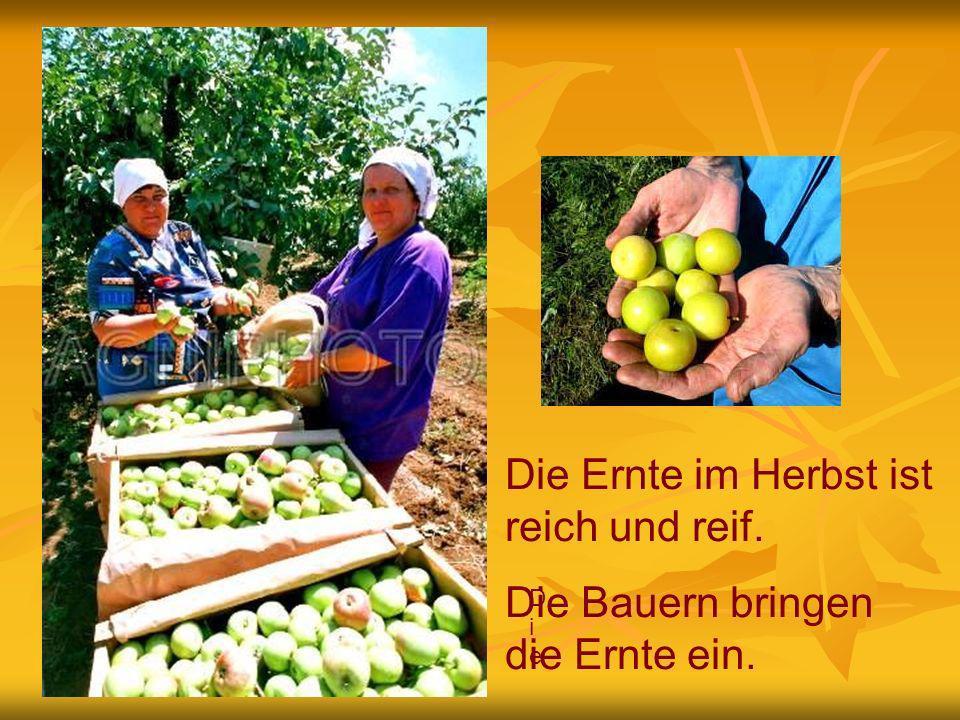 DieDie Die Bauern bringen die Ernte ein.