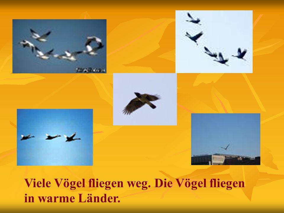 Viele Vögel fliegen weg. Die Vögel fliegen in warme Länder.