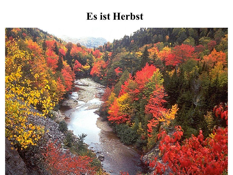 Es ist Herbst.Es ist . Bunte fliegen. Bunte, rot und, auf der Erde.