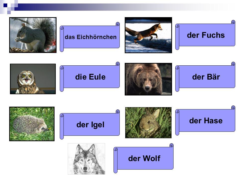 das Eichhörnchen die Eule der Igel der Fuchs der Bär der Hase der Wolf