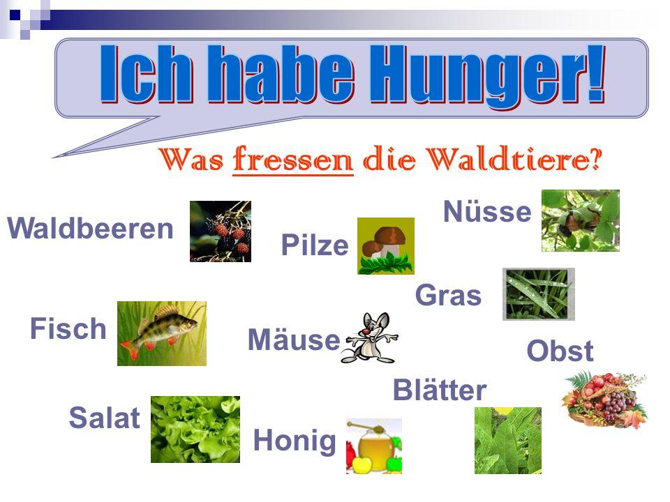 Was fressen die Waldtiere? Waldbeeren Pilze Nüsse Mäuse Gras Salat Blätter Fisch Obst Honig
