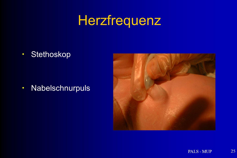 PALS - MUP 25 Stethoskop Nabelschnurpuls Herzfrequenz