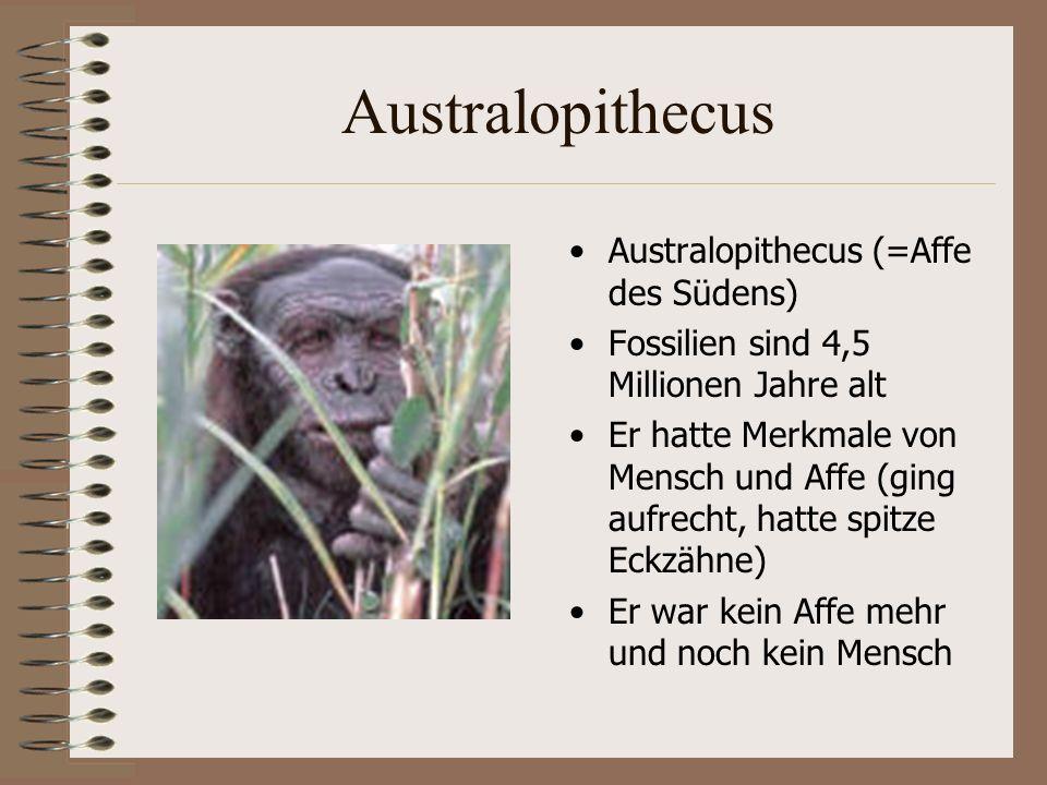 Australopithecus Australopithecus (=Affe des Südens) Fossilien sind 4,5 Millionen Jahre alt Er hatte Merkmale von Mensch und Affe (ging aufrecht, hatte spitze Eckzähne) Er war kein Affe mehr und noch kein Mensch