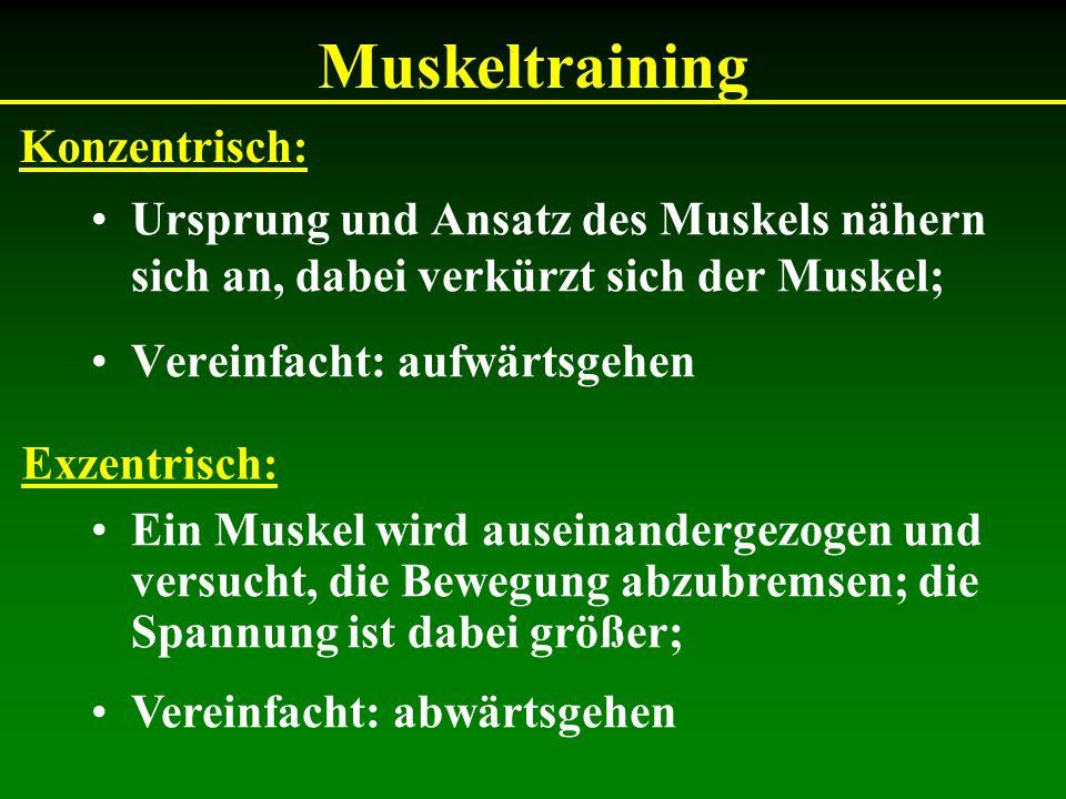 Muskeltraining Ursprung und Ansatz des Muskels nähern sich an, dabei verkürzt sich der Muskel; Vereinfacht: aufwärtsgehen Konzentrisch: Exzentrisch: E