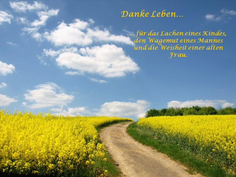 Danke Leben… …für ein Leben nach dem Tod und die Erkenntnis, dass der Tod Neubeginn sein wird.