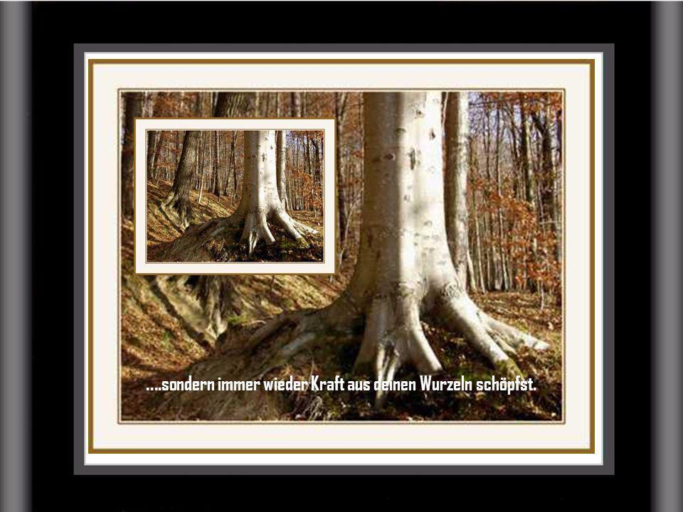 ....sondern immer wieder Kraft aus deinen Wurzeln schöpfst.