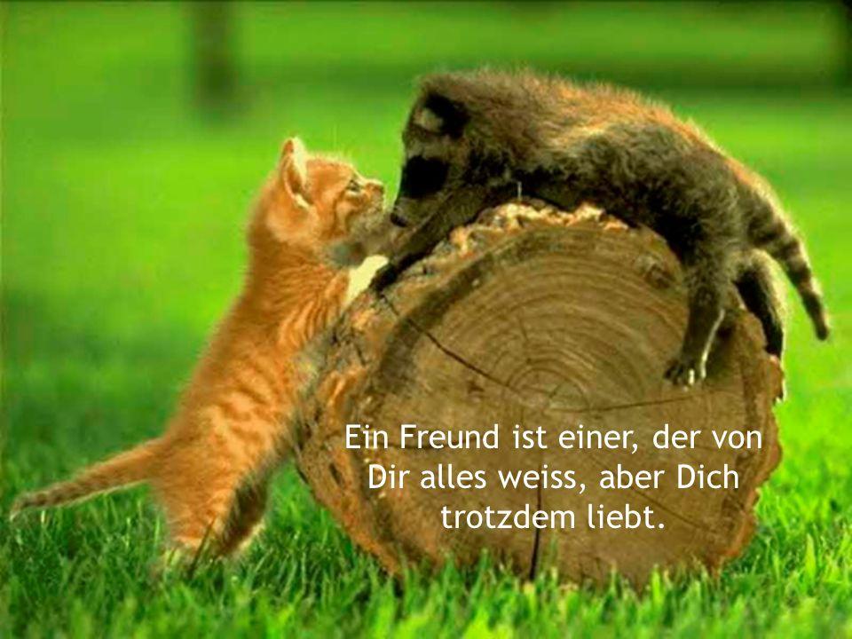Ein Freund ist einer, der von Dir alles weiss, aber Dich trotzdem liebt.