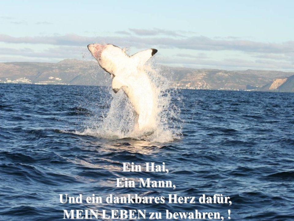 Ein Hai, Ein Mann, Und ein dankbares Herz dafür, MEIN LEBEN zu bewahren, !