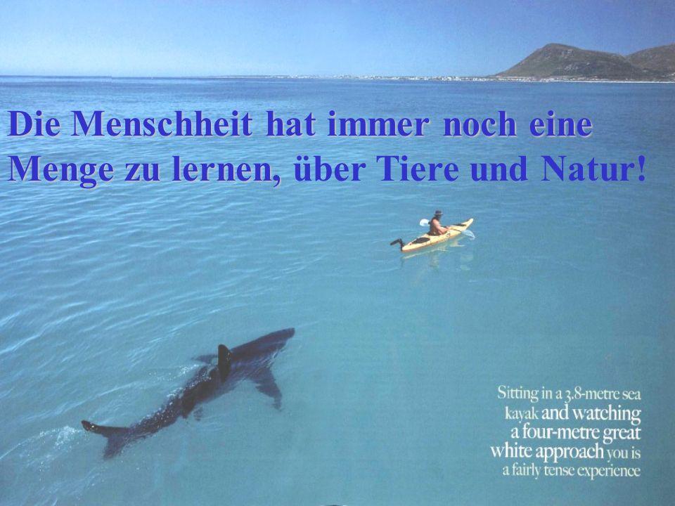 Die Menschheit hat immer noch eine Menge zu lernen, Die Menschheit hat immer noch eine Menge zu lernen, über Tiere und Natur!