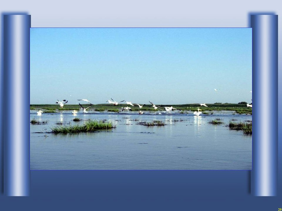 28...ein Paradies für Vögel...
