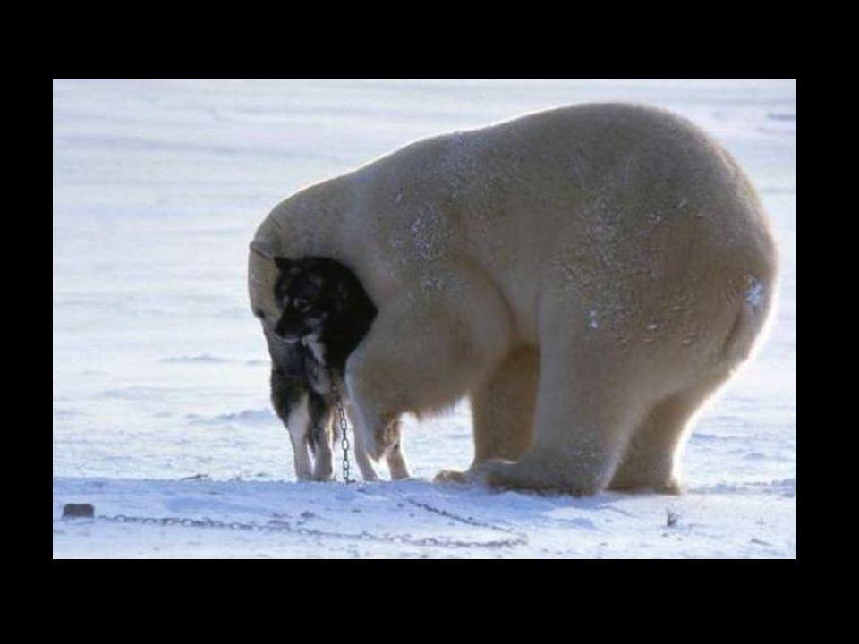 Glücklicherweise war dieser Bär nicht hungrig...