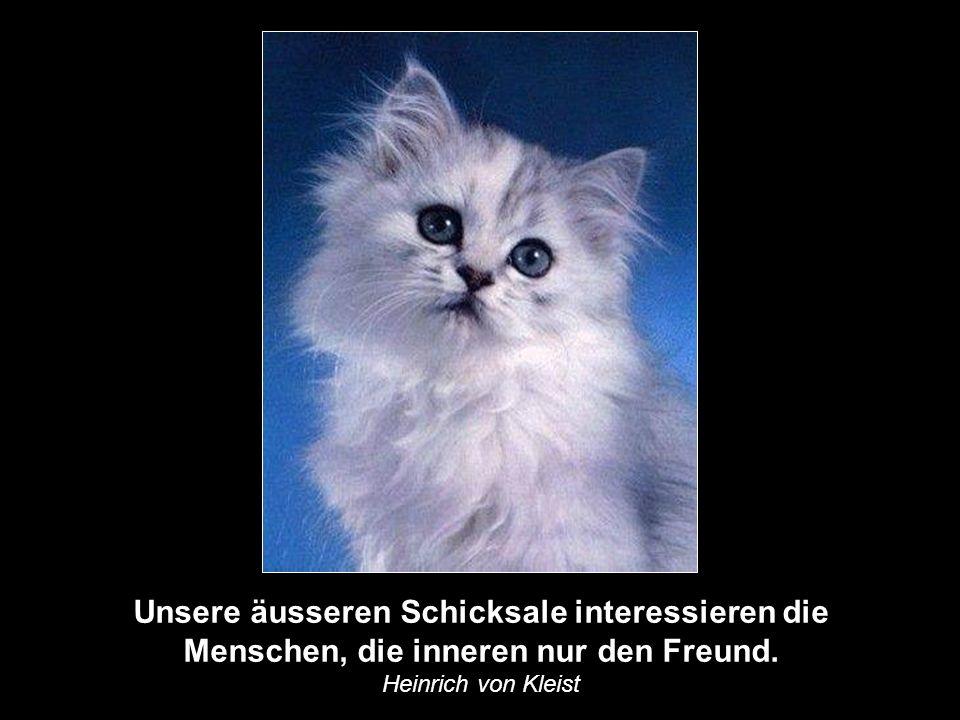 Ein Freund ist ein Mensch, der die Melodie deines Herzens kennt und sie dir vorspielt, wenn du sie vergessen hast. Albert Einstein