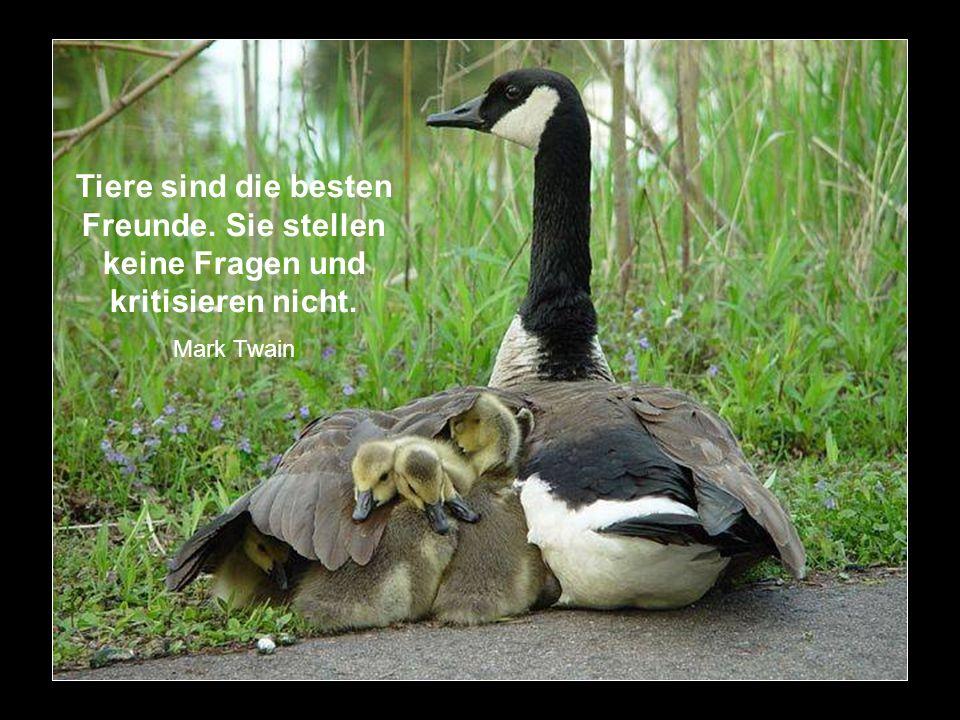 Ein freundliches Wort kostet nichts, und dennoch ist es das Schönste aller Geschenke. Sabine Sauer