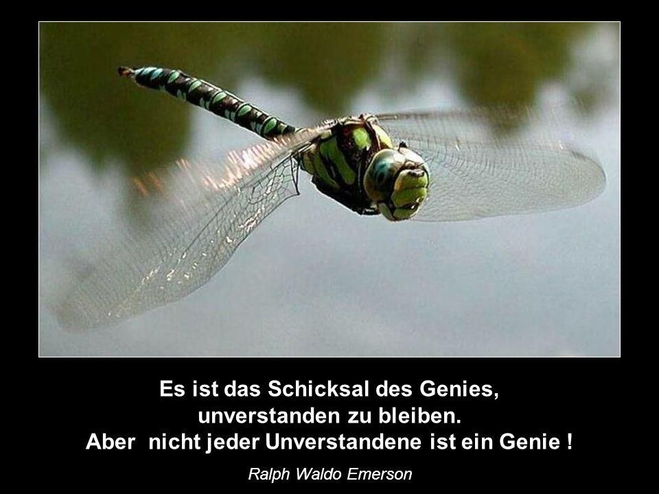 Wir leben alle unter dem gleichen Himmel, aber wir haben nicht alle den gleichen Horizont. Konrad Adenauer