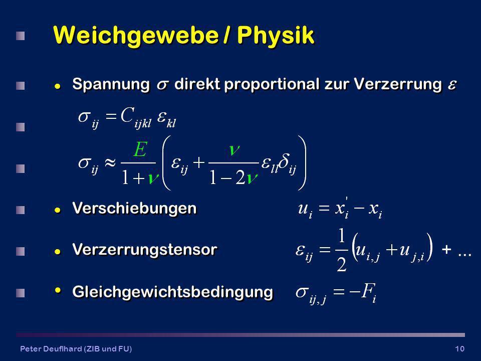 Peter Deuflhard (ZIB und FU)10 Weichgewebe / Physik l Spannung direkt proportional zur Verzerrung l Verzerrungstensor Gleichgewichtsbedingung l Verschiebungen +...