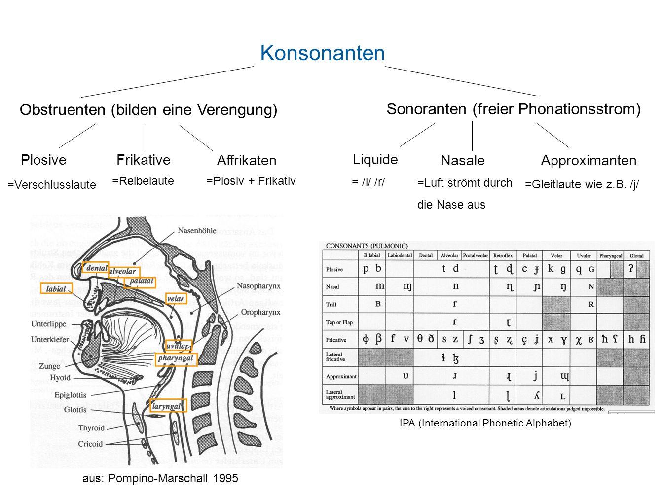 Konsonanten Obstruenten (bilden eine Verengung) Sonoranten (freier Phonationsstrom) PlosiveFrikative Affrikaten Liquide Nasale Approximanten IPA (Inte